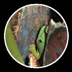 Onegecko